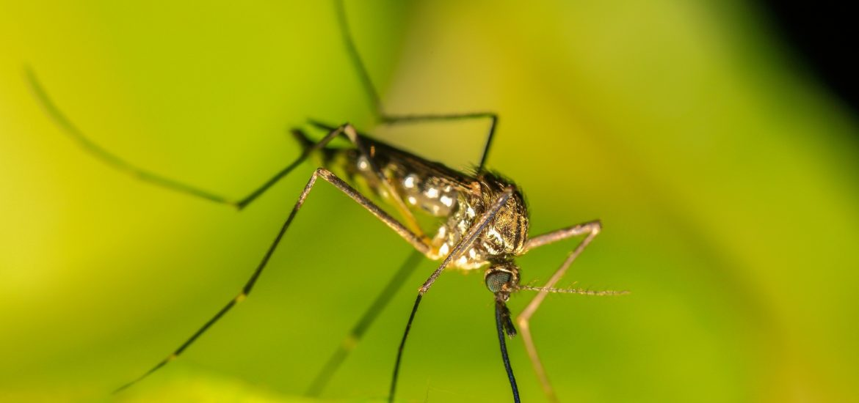 Soulager les piqûres d'insectes avec des remèdes naturels